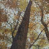 45 - Vertige - Huile - 61 x 50 cm