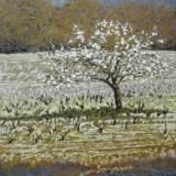 113 - Pommiers dans la vigne - Huile - 65 x 54 cm