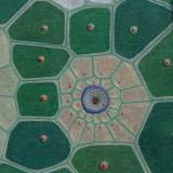 196 - Cellules - Détail 4 - Couleurs prisme - particules en suspension naturellement agglomérées en cellules en séchant