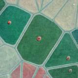 196 - Cellules - Détail 5